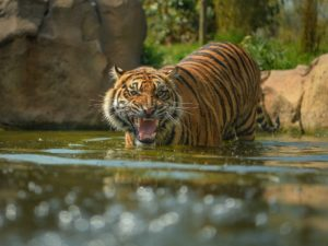 New record as Chester Zoo attracts one million visitors