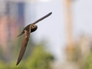 Conservationists call for public to help save much loved bird species