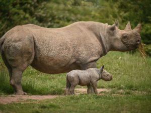 Chester Zoo named world's third best zoo by TripAdvisor