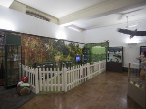Chester's Grosvenor Museum Reveals New Natural History Gallery